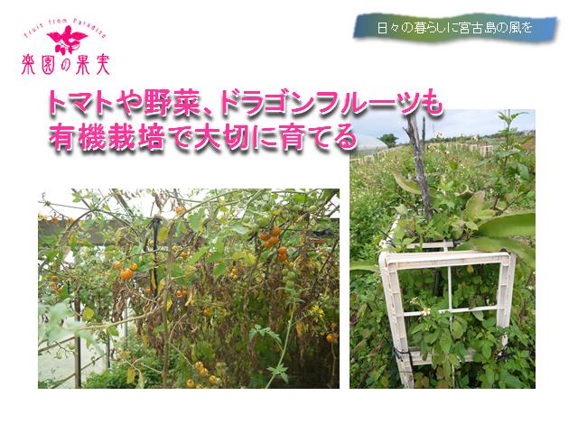 sunakawahoumon3_480x120