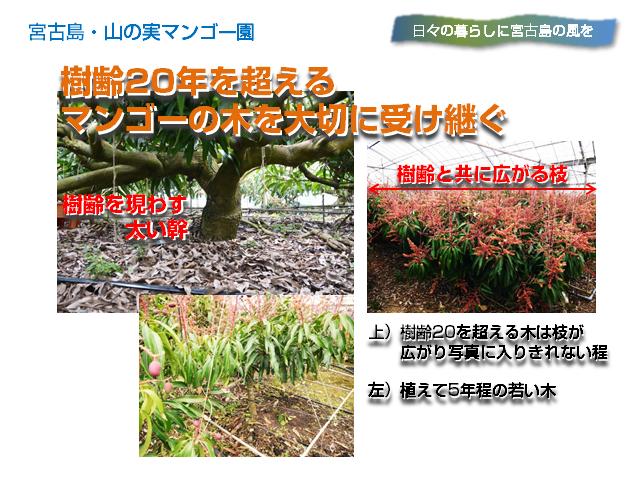 yamanomi4_640x480