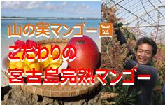 yamanomimango_top236x150